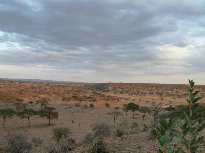Plains Tanzania