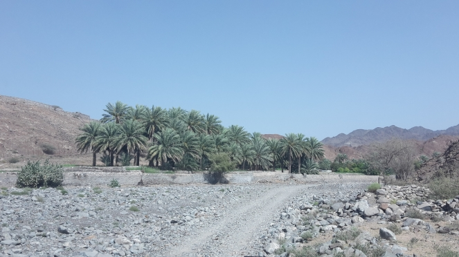 wadi 22