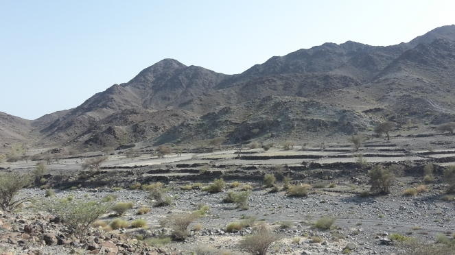 wadi plantations
